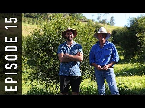 EP 15. Finger Lime Caviar | Andy & Ben Eat Australia