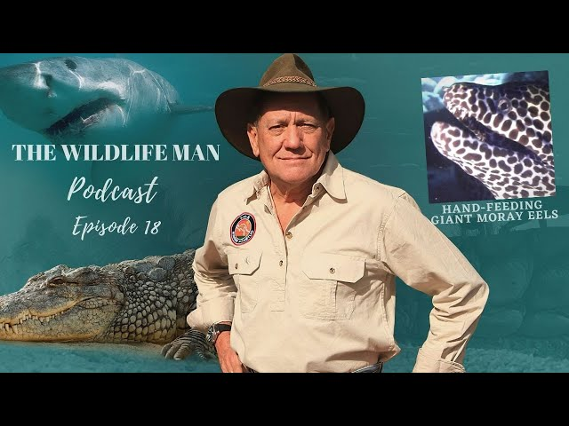 The Wildlife Man Podcast - Episode 18 - Hand-Feeding Giant Moray Eels