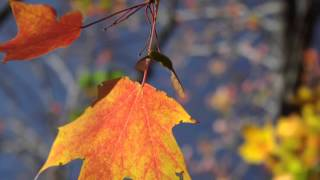 """The Reader reads """"October"""" by Robert Frost"""