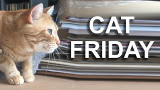 CAT FRIDAY - PAROLE DE CHAT