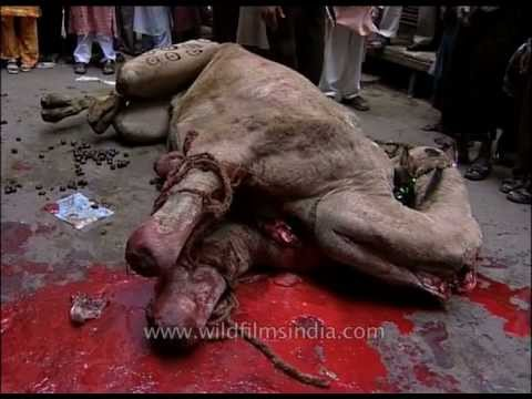 Pictures Of Killing Dogs In India