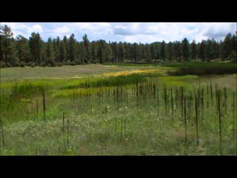 Big Springs Environmental Study Area in Pinetop-Lakeside Arizona