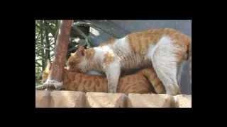 جنس القطط