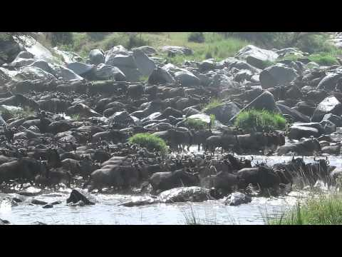 Great Migration 2014