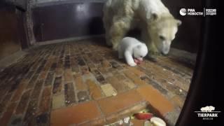 Уроки этикета для полярного медвежонка
