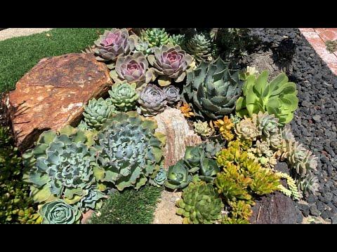 Beautiful Succulent & Cactus Tapestry