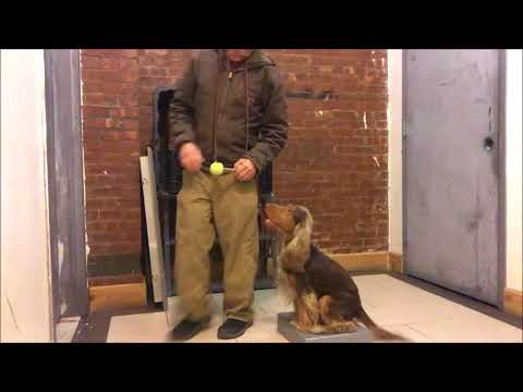 Why exercising dogs mind is better than Physical Exercise for K9
