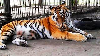 Барнаульский Зоопарк | Лесная Сказка 🐎 🐗