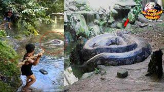 Warga Heboh!! Ular Piton Raksasa Sepanjang 6 Meter Tak Sengaja Ditemukan di Sungai