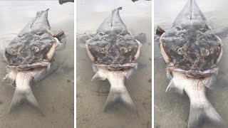 Monster Fish Chokes While Trying To Eat Whole Fish