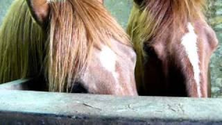 site rencontre chevaux skyrock rencontre emo
