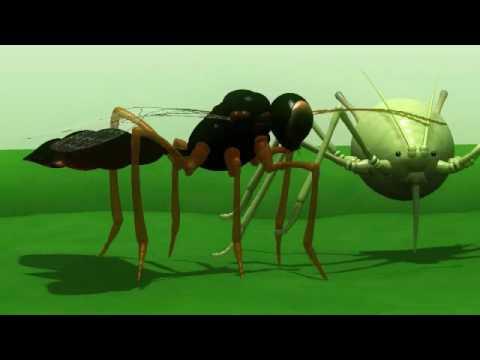 Dos ejemplos prácticos del control biológico de los cultivos - Видео онлайн