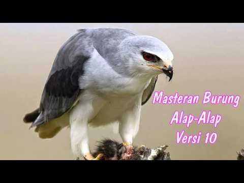DOWNLOAD SUARA MASTERAN BURUNG ALAP-ALAP VERSI 10 FULL HD