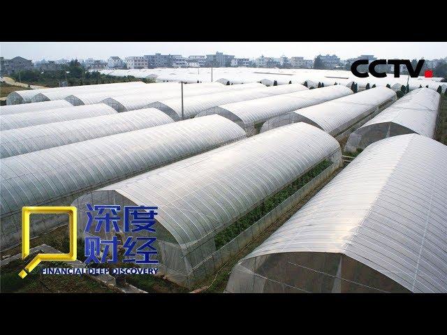 """《深度财经》 乡村振兴新动力:跨界做农业 """"门外汉""""的加入对乡村振兴带来哪些变化?20190406   CCTV财经"""