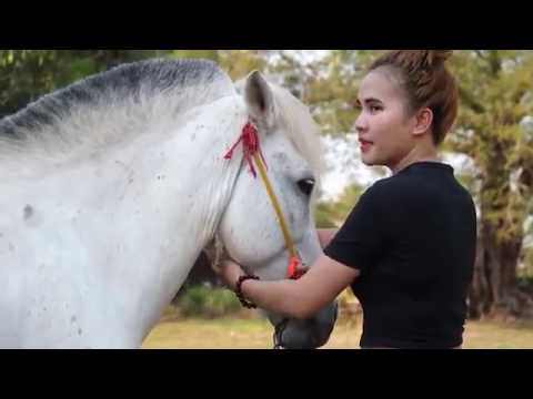 Lovely Girl Playing With Horse - How to teach your horse to lay down