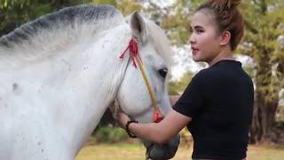 Download Video Lovely Girl Playing With Horse - How to teach your horse to lay down MP3 3GP MP4