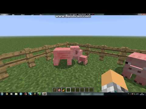 Wie Schlachtet Man Schweine