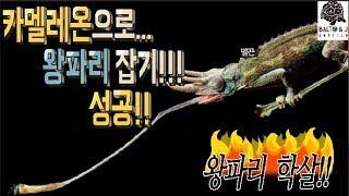 카멜레온으로 왕파리 사냥 성공 이건 왕파리 학살 수준 …