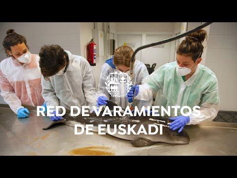 🐋⛑ Red Varamientos de Euskadi [CAS]