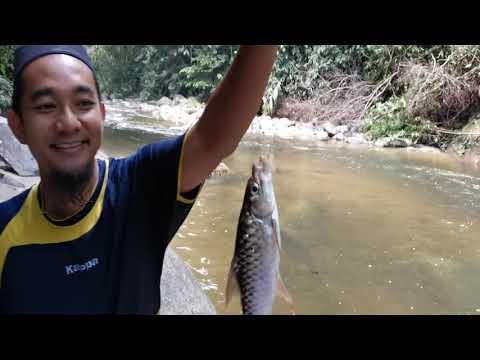Memancing Kelah & Tengas Sungai Pertak / Menu : Masak Stim Dan Goreng Halia : Catch & Cook #1