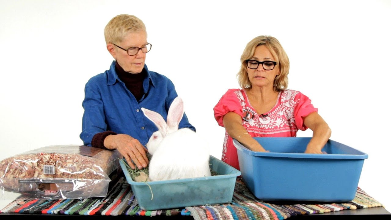 Best Litter Material For A Rabbit Pet Rabbits Youtube