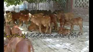 Livestock feeds Pakistan part-2 Dr.Ashraf Sahibzada