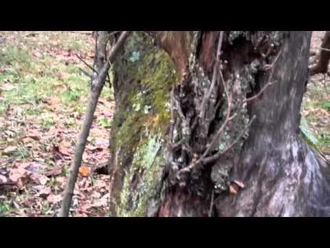 Natureglo's Sit Spot Adventures in WV - A Second Sit Spot