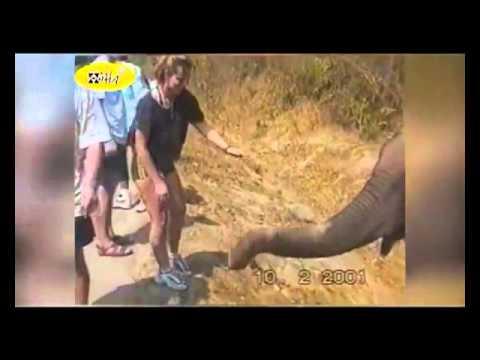 animales graciosos atacando