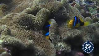 Fiji's Underwater Regulars