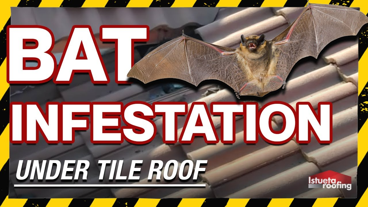 bat infestation under tile roof roofing miami fl youtube