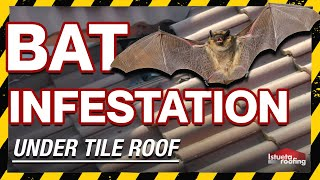 Bat Infestation Under Tile Roof- Roofing Miami, FL thumbnail