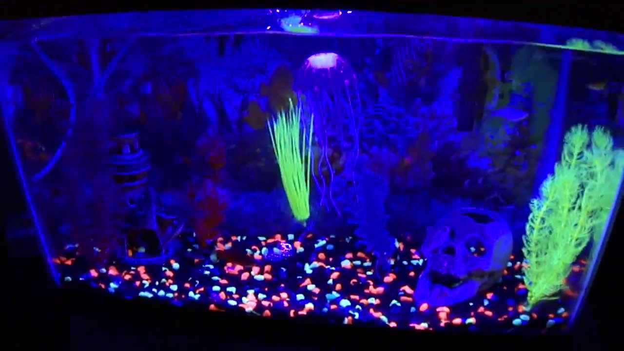 10 gal fish tank with glofish features youtube for Glow fish tanks