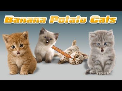 Banana Potato Cats - Gatinhos cantores