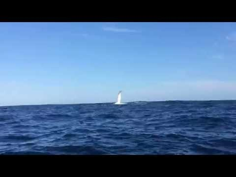 Dolphins and Whale Compilation - Offshore Rockingham, Perth