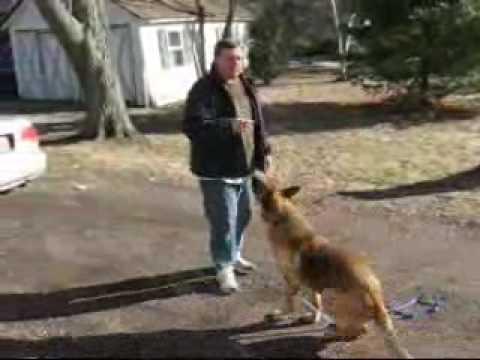 Dog Training - Use The Premack Principle For Dog Training