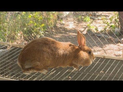 Prohuerta Promueve La Cría De Conejos Para Consumo En Huertas Familiares Youtube