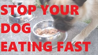 How To Make Your Dog Eat Slower & Help Stop Flatulence
