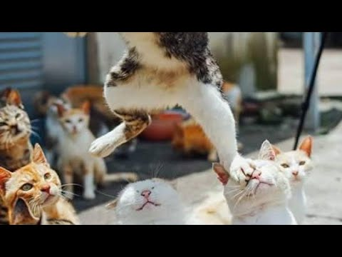 You are NOT GOING TO BELIVE your OWN EYES - FUNNY  animal compilation