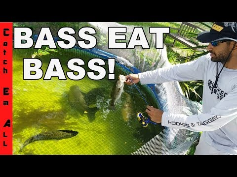 Thumbnail: BASS EAT BASS! SOLAR ECLIPSE FISHING CHANGES in SEWER!