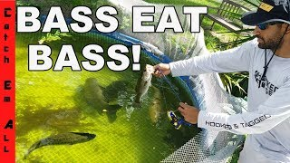BASS EAT BASS in my Pool Aquarium! FISHING CHANGES in SEWER!