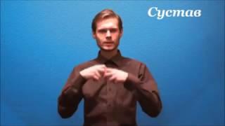 Русский жестовый язык. Урок 4. Человек
