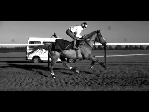 Galloping Horse in Super Slow Motion