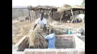 Traitement de la paille du riz à l'urée chez ALHADJI Bernard à Yagoua (le Berger)