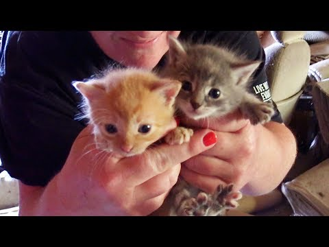 6 Kittens Rescued From Abandoned Property