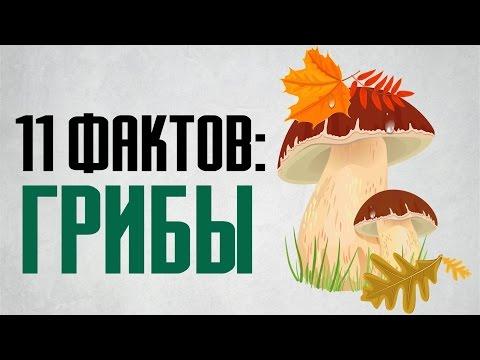 11 фактов о грибах и интересных свойствах грибов