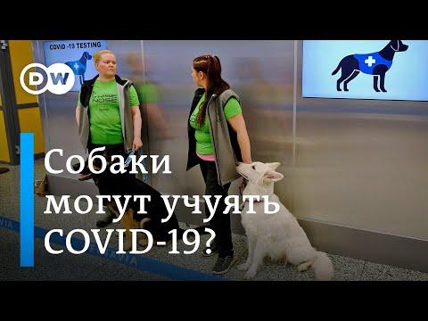 Можно ли распознать коронавирус без теста: в Финляндии выявить носителей COVID-19 помогают собаки
