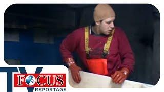 Der gefährlichste Beruf Europas: Knochenjob Hochseefischer | Focus TV Reportage