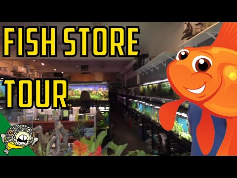 Fish Store Tour - The Wet Spot Tropical Fish in Portland Oregon. HUGE STORE! Hundreds of tanks.