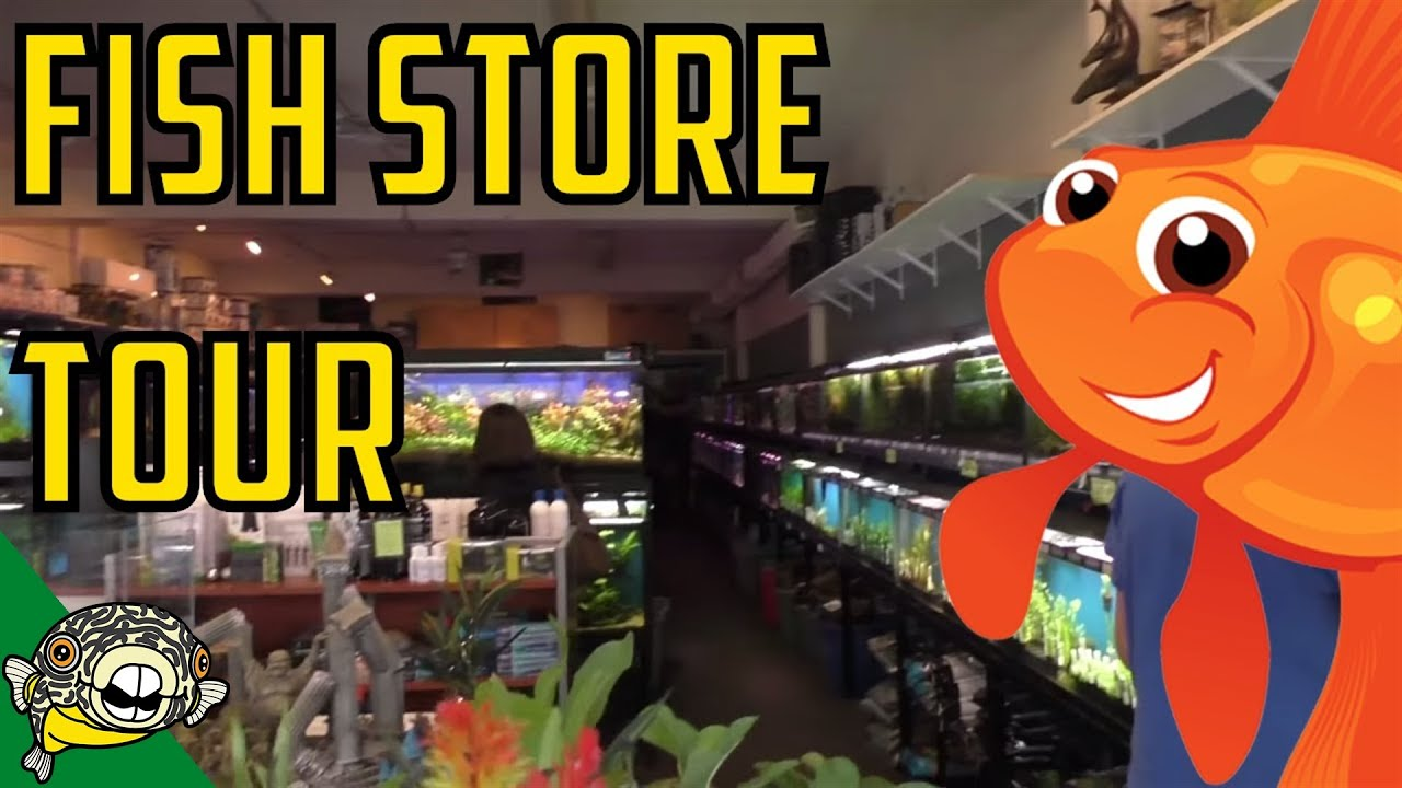 fish store tour the wet spot tropical fish in portland