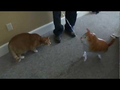BERT THE CAT DOES FUS RO DAH!